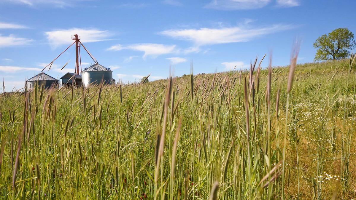Cover Crops grow in a field.
