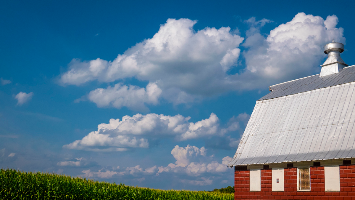Farmland with corn field and barn.