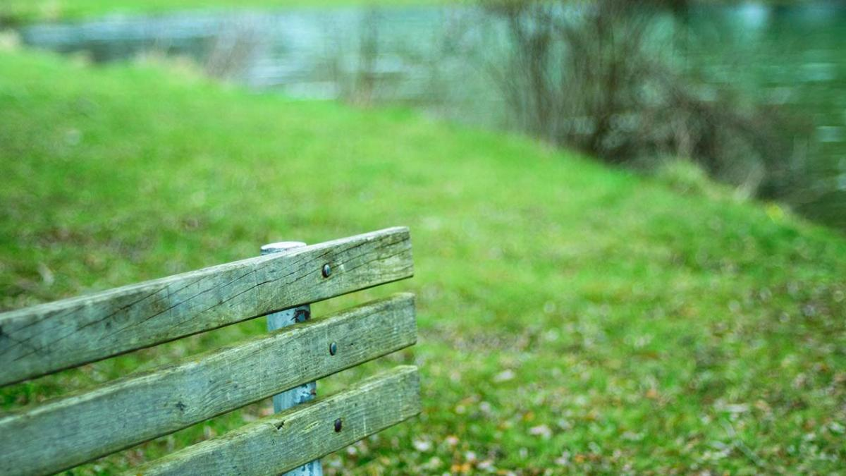 Closeup of bench in a park.