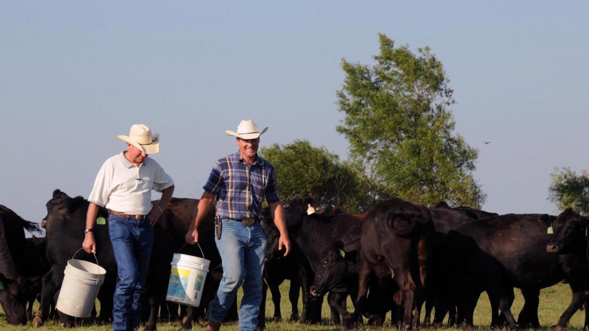 Two men walking in pasture.