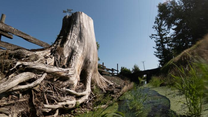 Tree stump near stream.