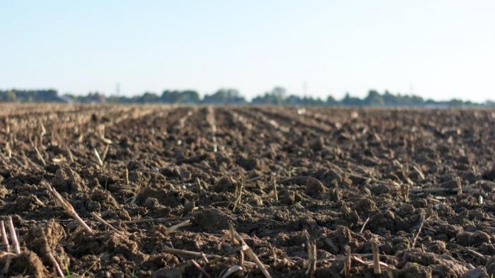 Eye-level photo of soil in field.