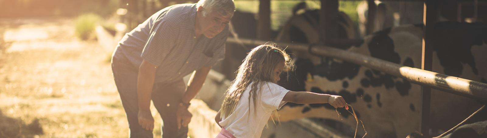 Young girl feeding livestock
