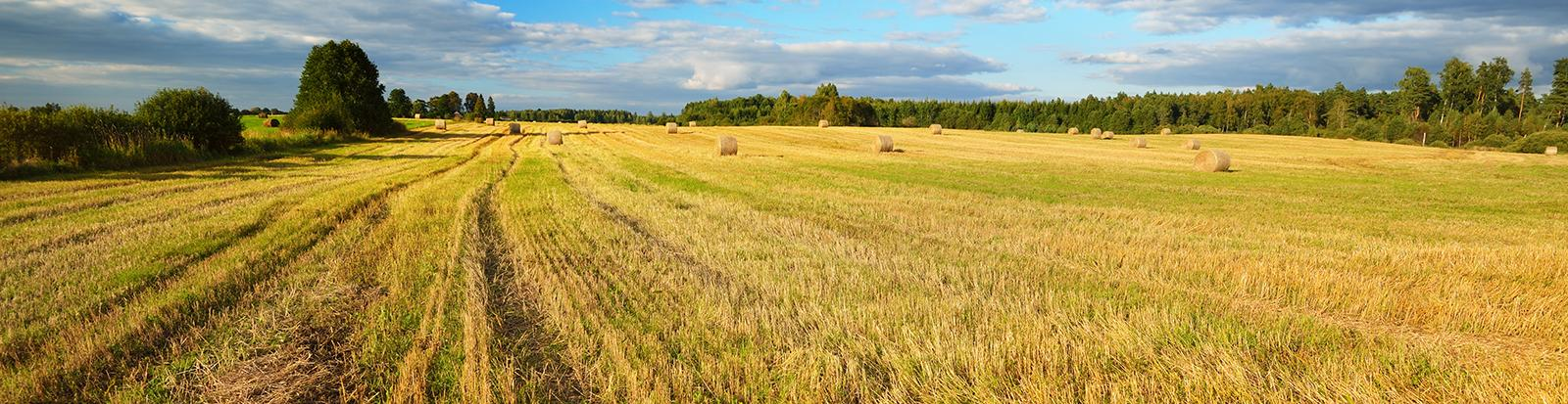 Hay in field.